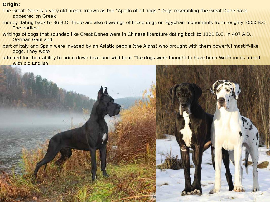 Domestic dog breeds. Particular care, treatment and behavior ...