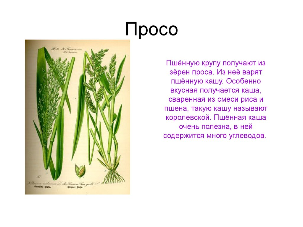 Как вкусно приготовить жульен с шампиньонами