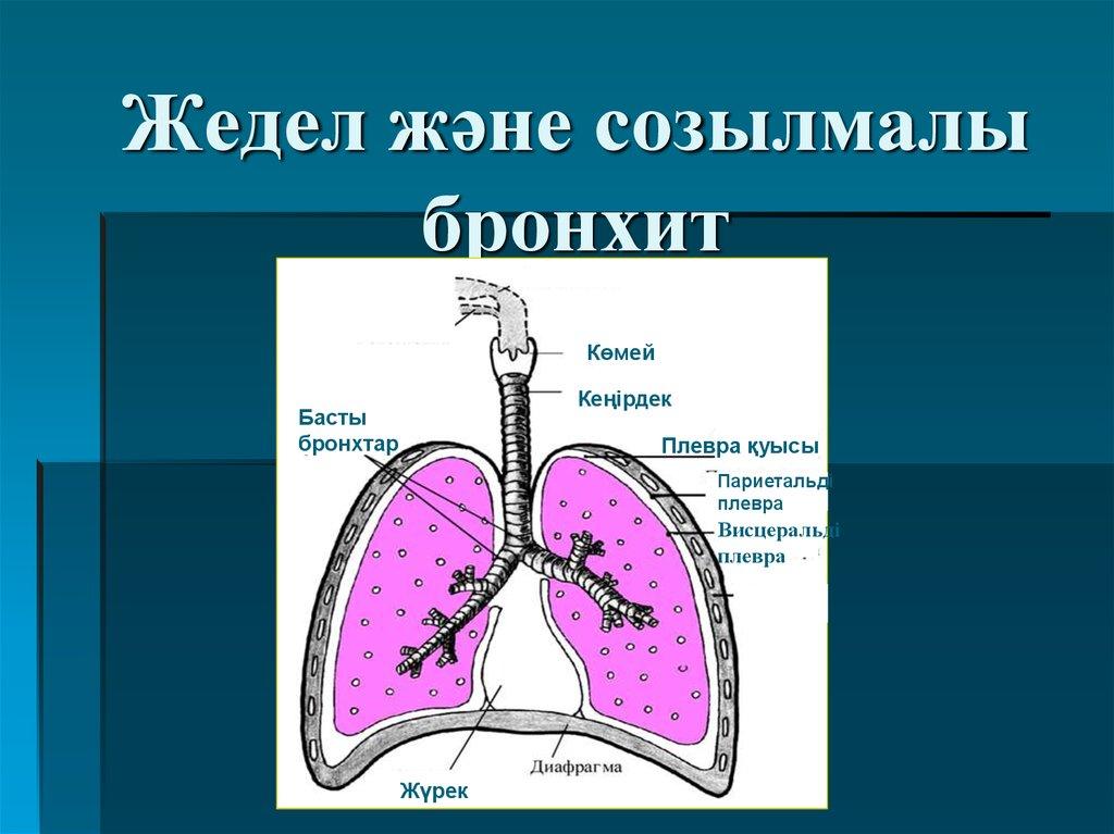 микоплазма пневмония детей лечение
