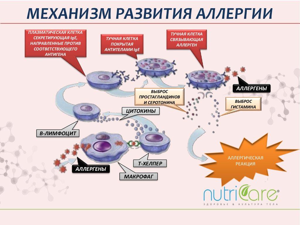 как бороться с аллергией на шерсть