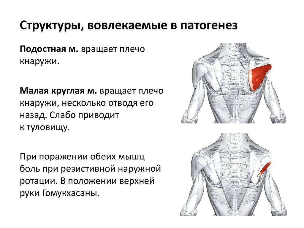 лечение от боли в плечевом суставе народные способы