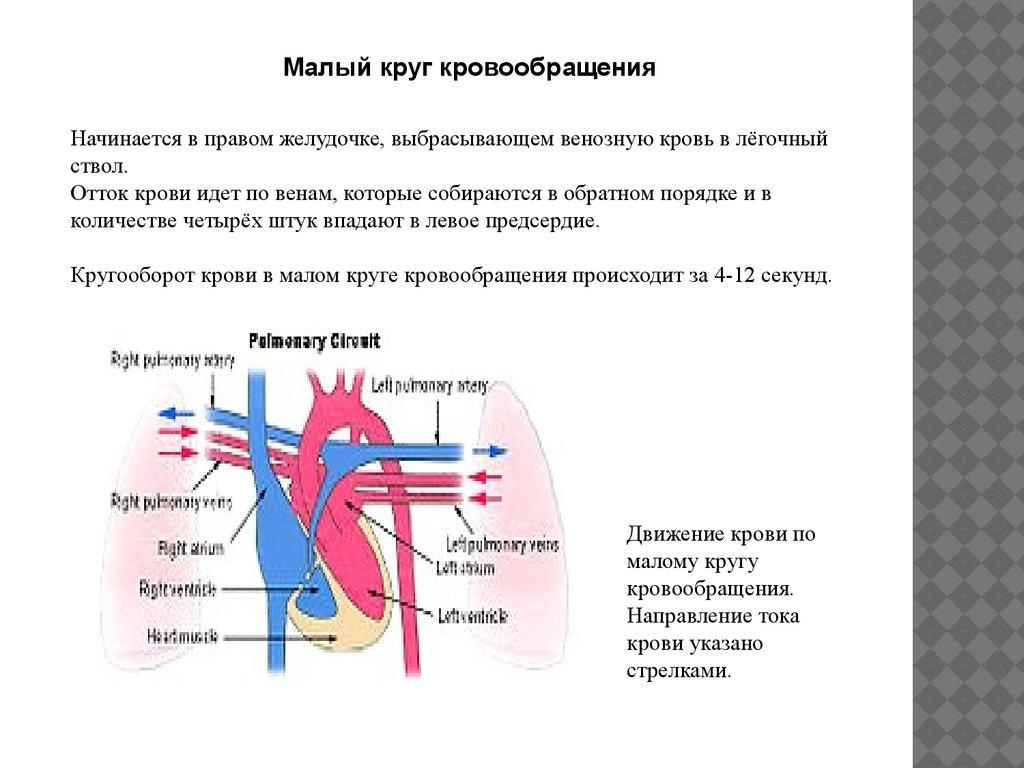 схема движения крови в большом круге кровообращения