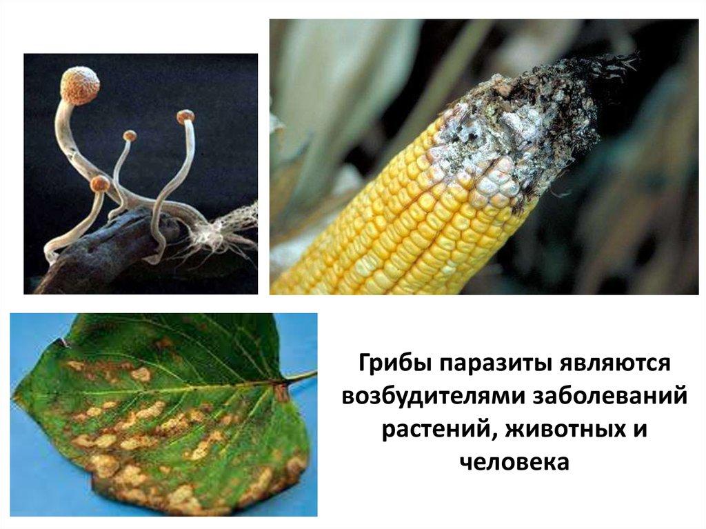 паразиты едят человека