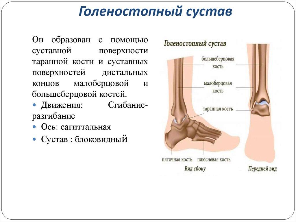 не разгибается голеностопный сустав после перелома
