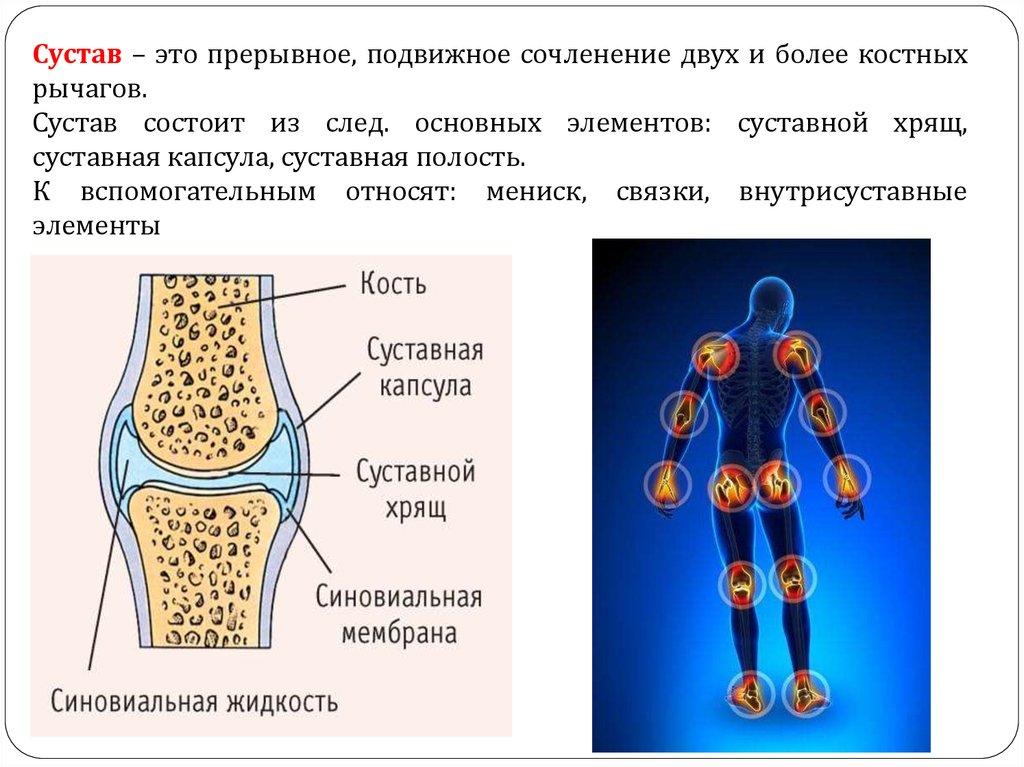 сустав как прерывное соединение костей