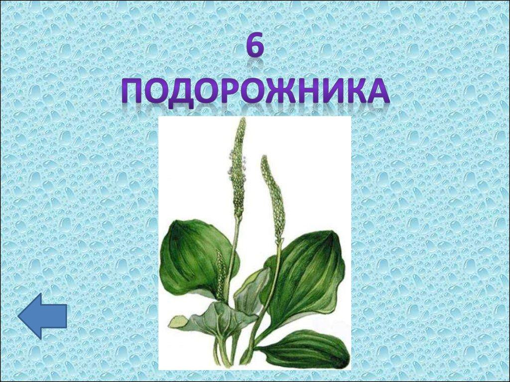 Презентация к уроку 4 класс по теме Сказки Степана