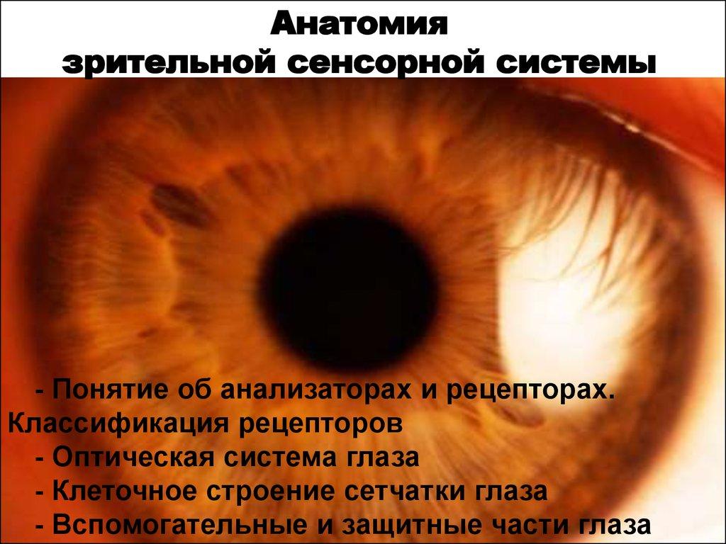 презентация глаз как оптическая