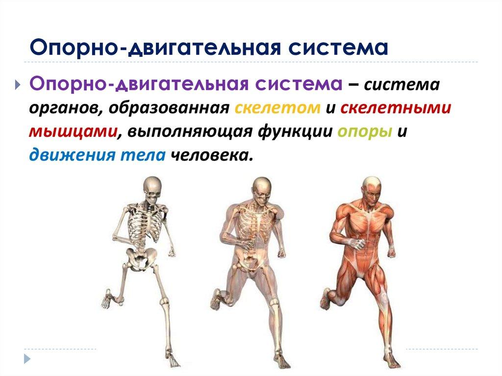 Анатомия человека в картинкахЛучшие анатомические плакаты