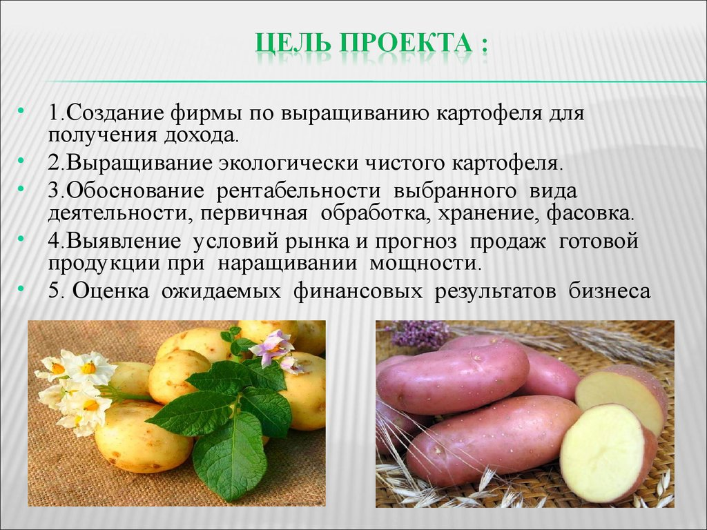 Как начать бизнес по выращиванию картофеля 79