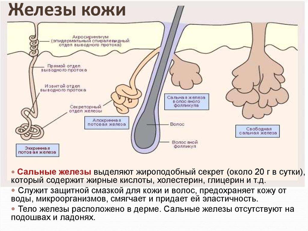 очищение от холестерина народными средствами