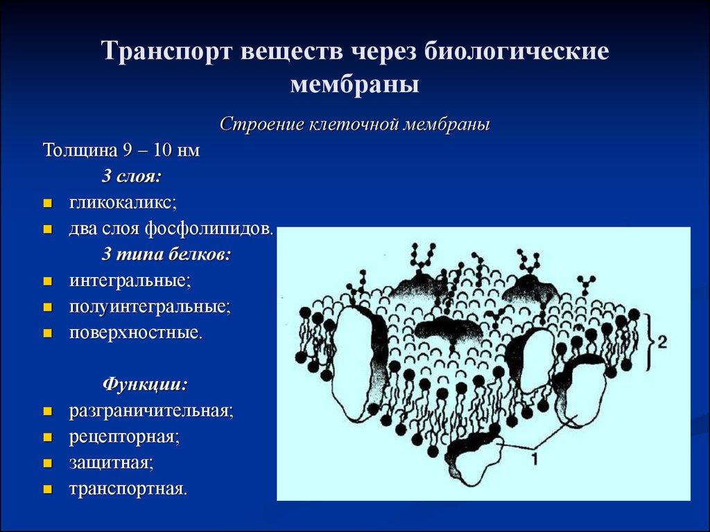 Транспорт веществ через биологические мембраны
