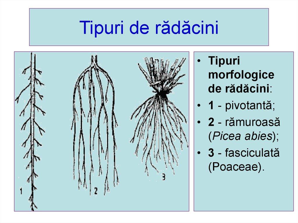 Slide 15 Alcatuirea Plante Fruct