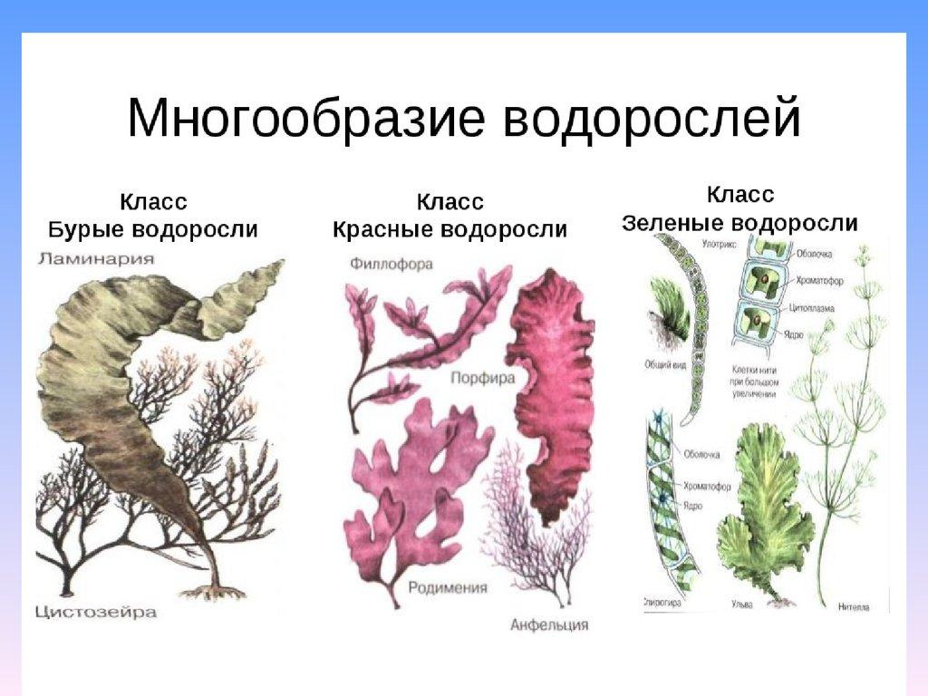 доклад на тему растения паразиты