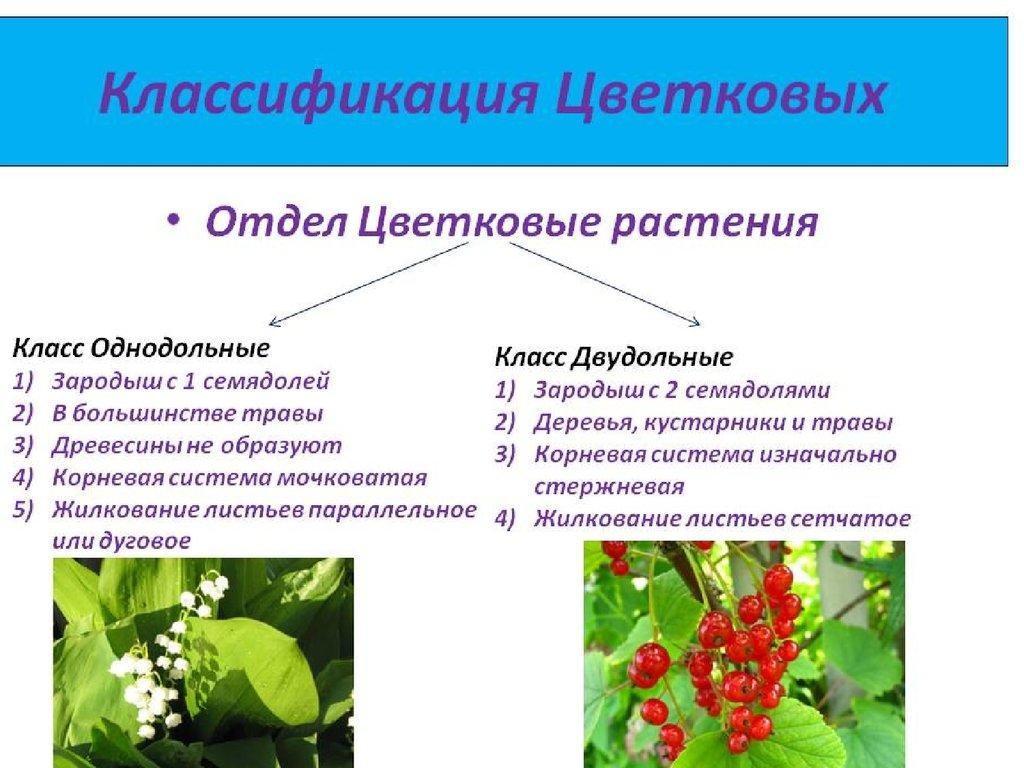 многообразие покрытосеменных растений 6класс гдз