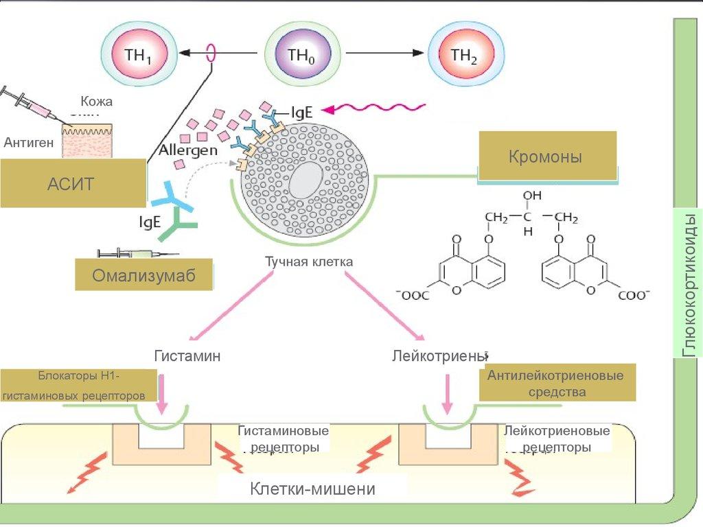 противоаллергические препараты весенняя аллергия