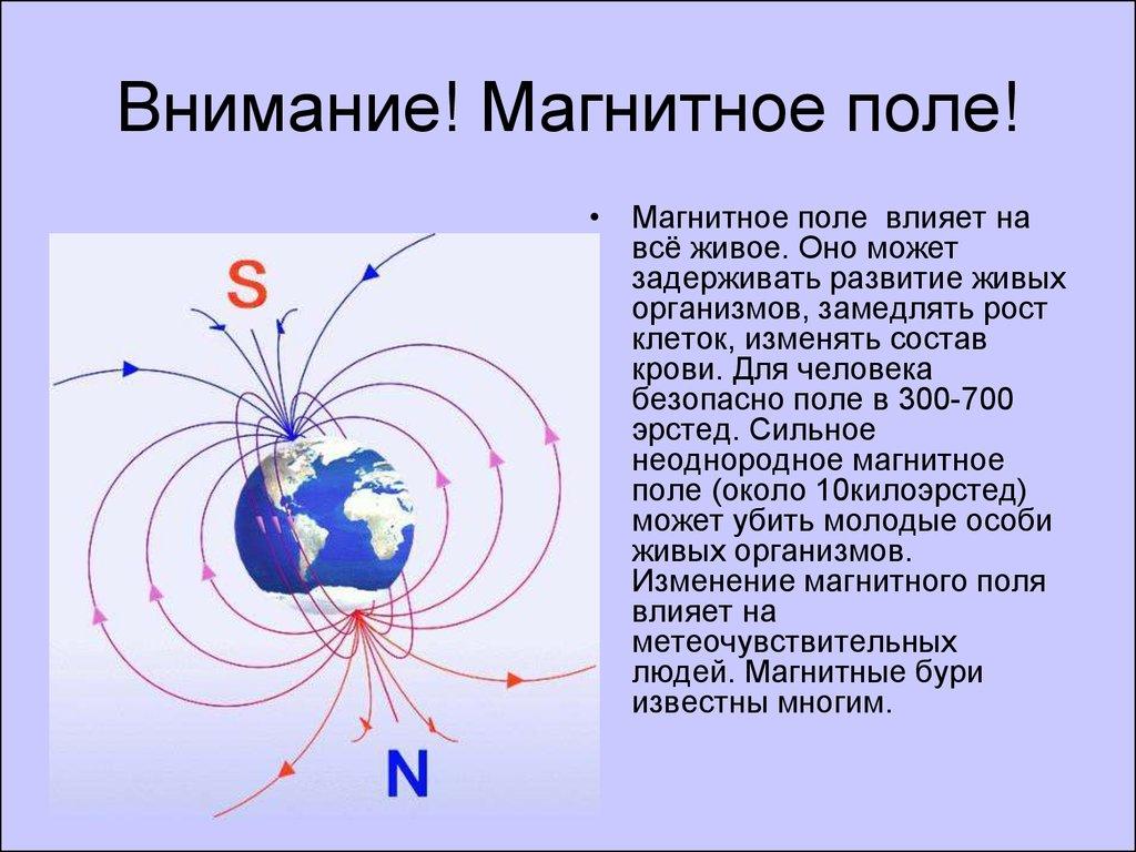 Влияние Магнитного Поля На Живые Организмы Реферат