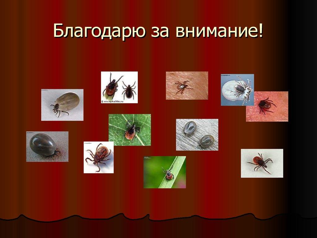 обследования паразитов в организме
