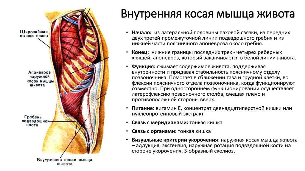 Что делать когда болит мышца спины
