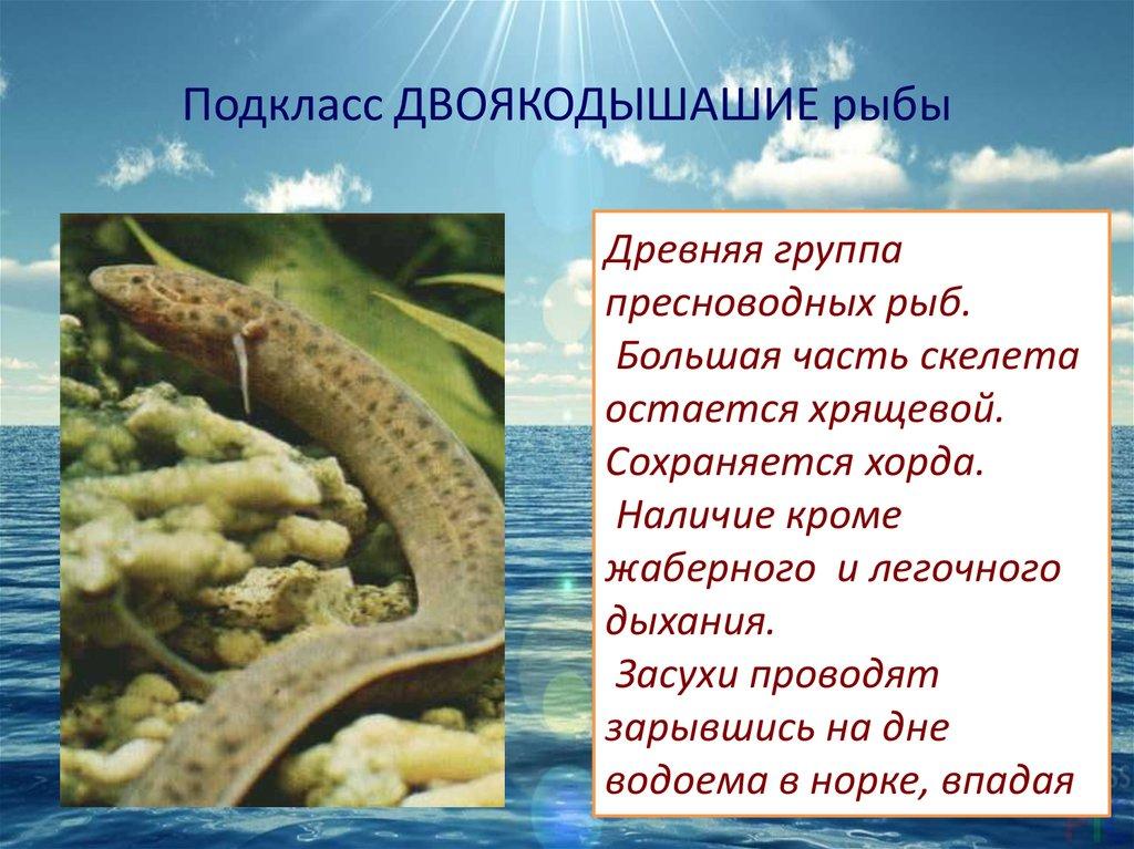Группа организмов связанная родством