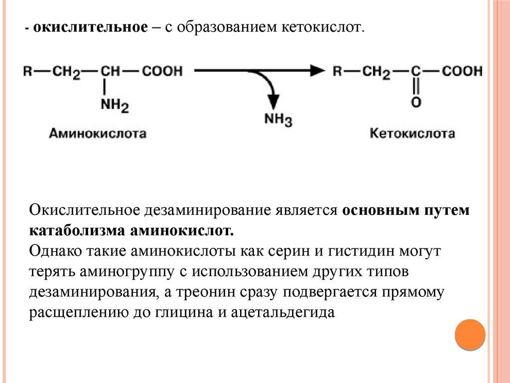 Химотрипсиноген
