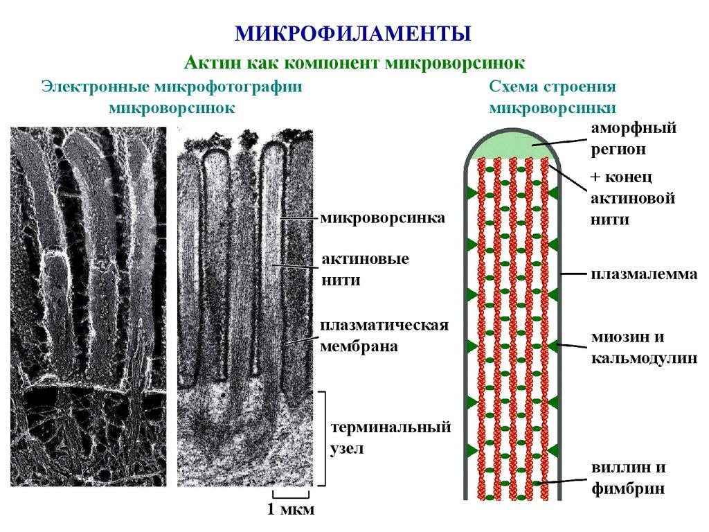 Микрогематокрит