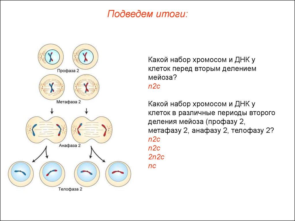 малышева о паразитах в организме человека