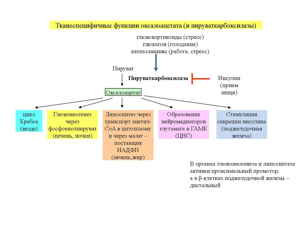 domashniy-rolik-zhena-soset-chlen