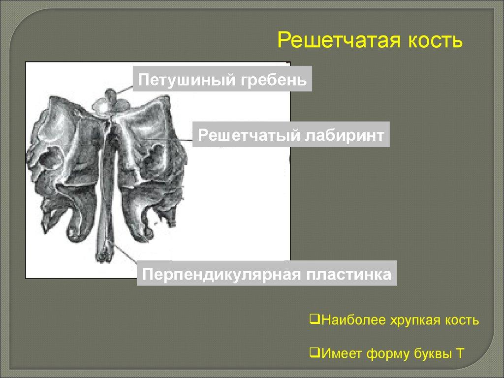 Суставы человека Опорнодвигательный аппарат и подробное