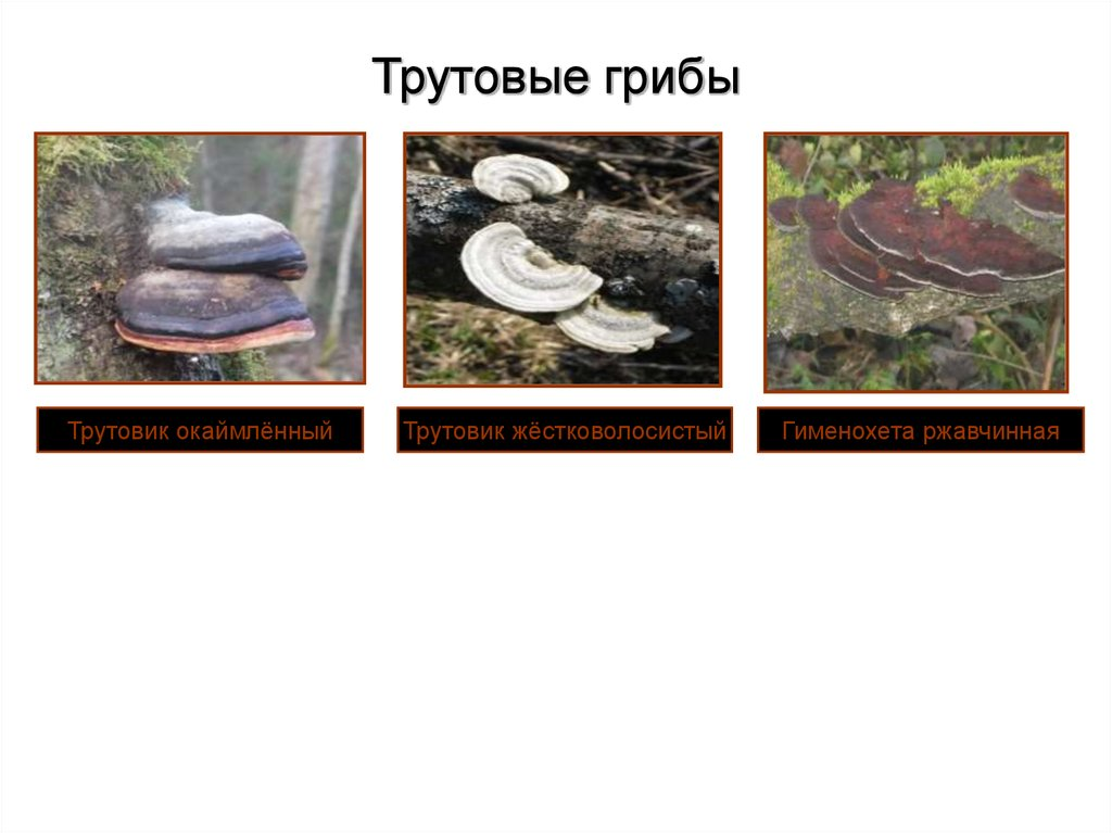 паразиты грибы в организме человека