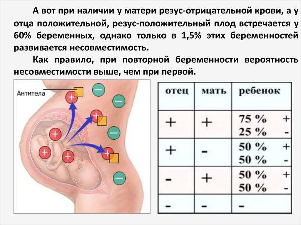Разные резус факторы влияют на беременность