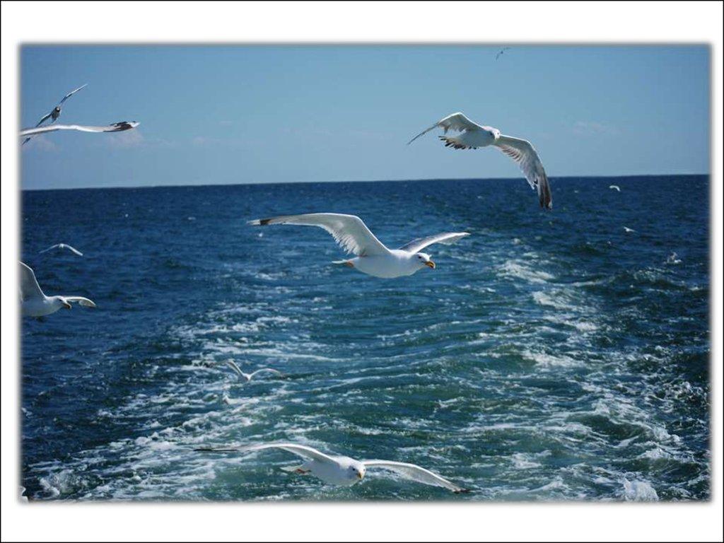 что сон синее море и чайки как раз другая