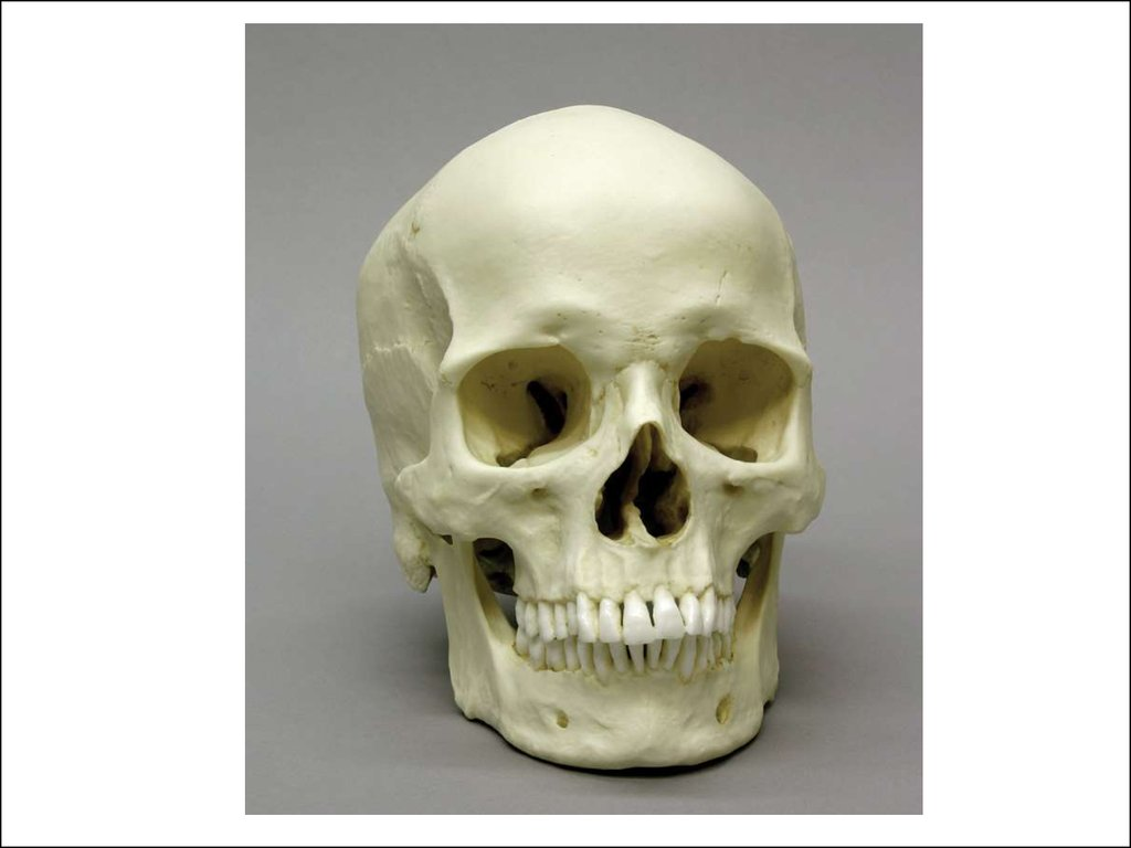 Что такое позвоночник скелет