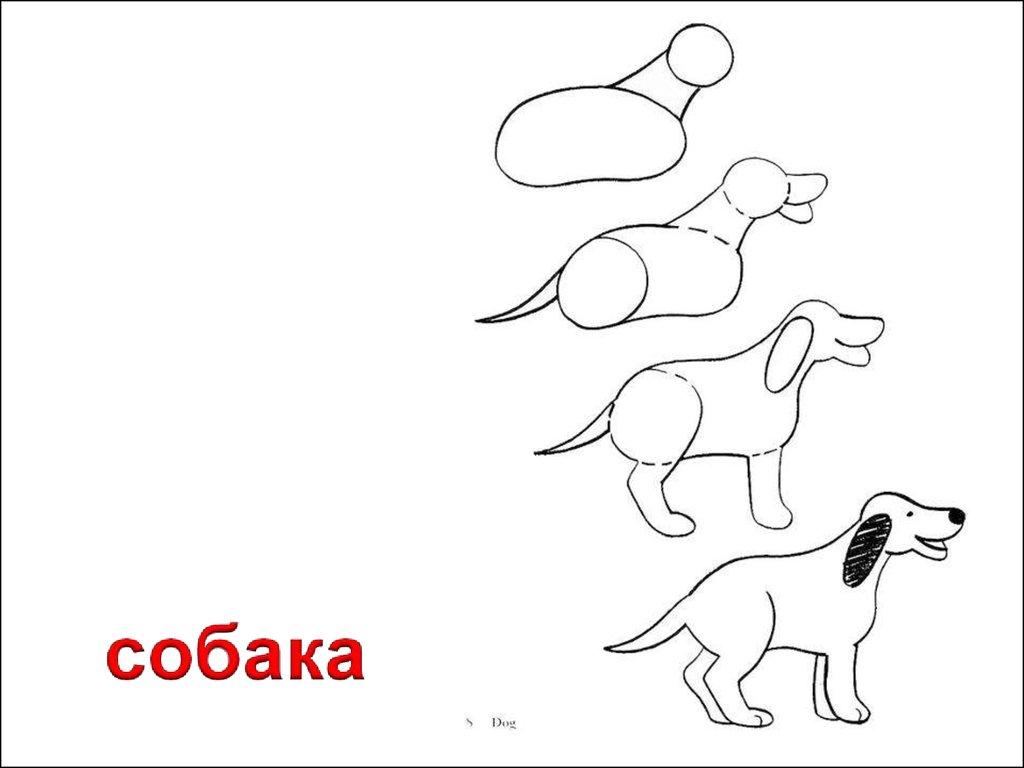 Рисовать животных учица