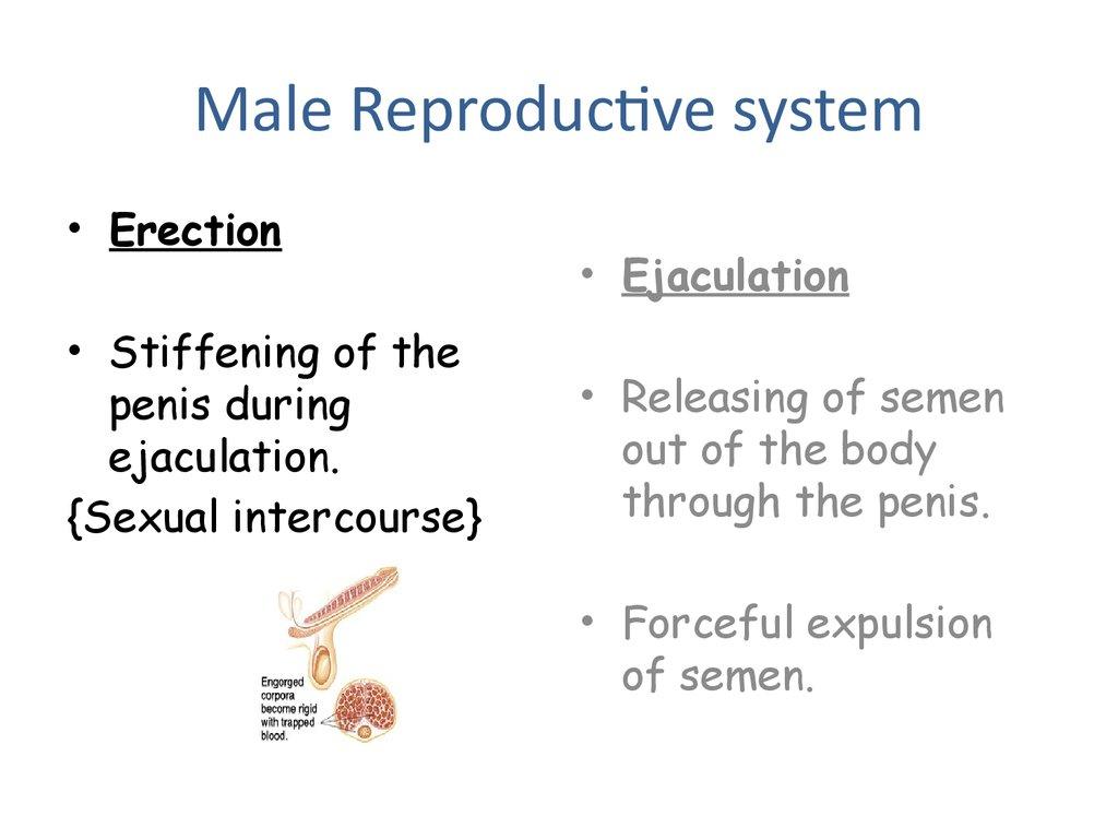 Erect Penis Ejaculation 57