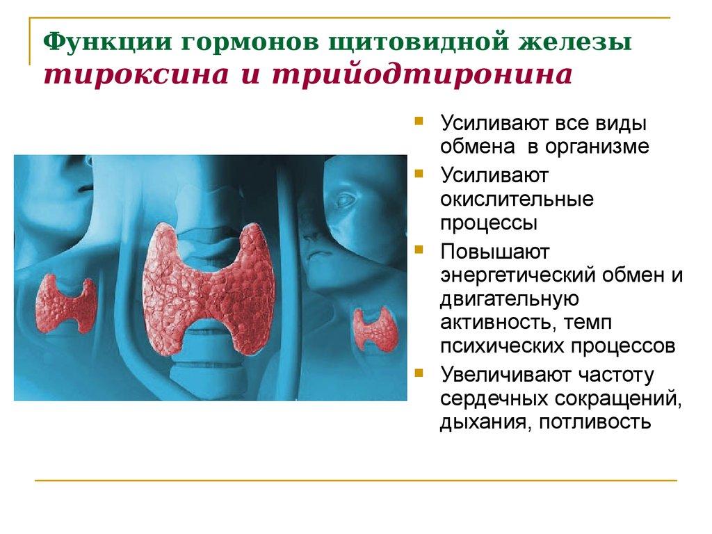 Диагностика и лечение базедовой болезни