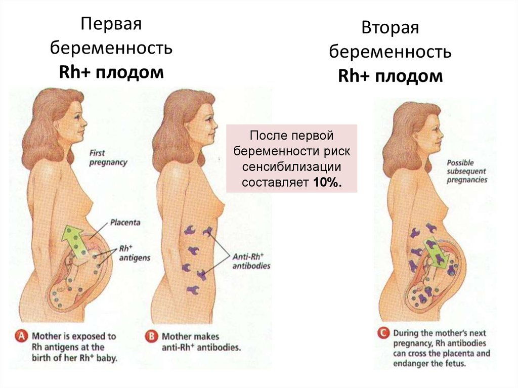Проявления беременности на первой недели