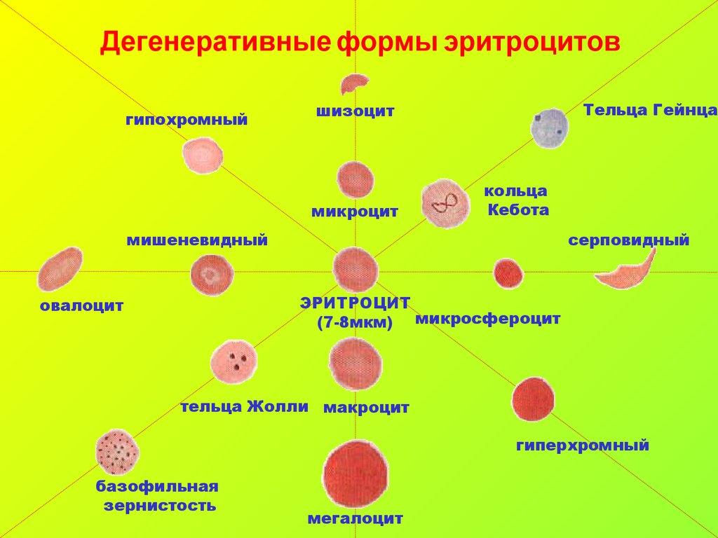 Микроцит