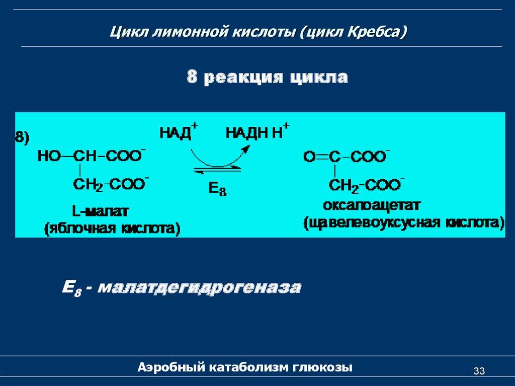 Щавелевоуксусная кислота ацетоуксусная