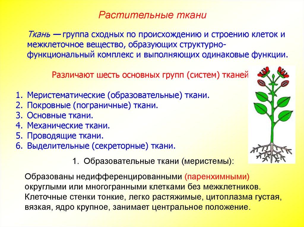 русская тройчатка от паразитов купить в аптеке