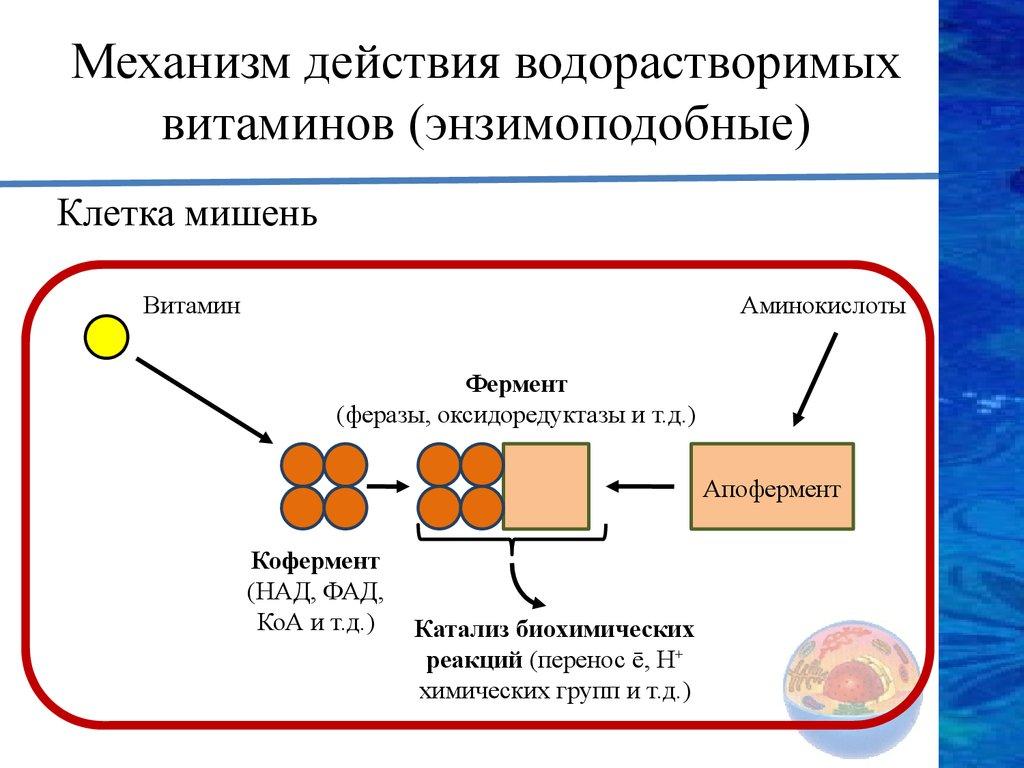 витамины жирорастворимые и водорастворимые презентация