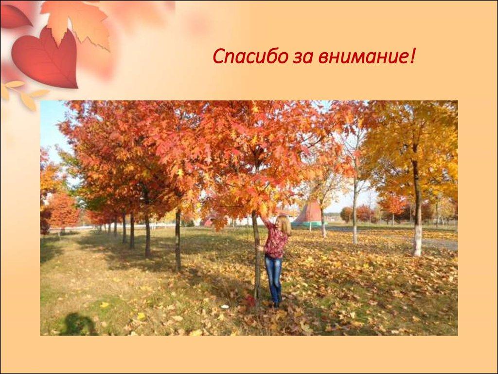презентация знакомьтесь это я на мисс осень