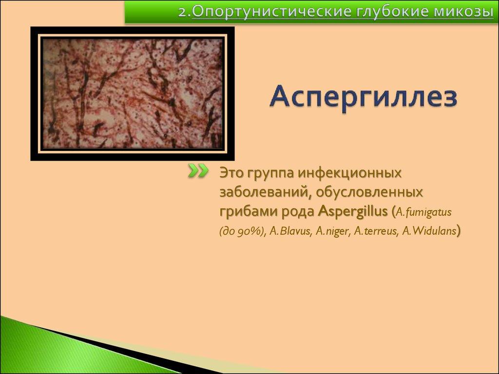 ЛЕКЦИЯ  xlibyru