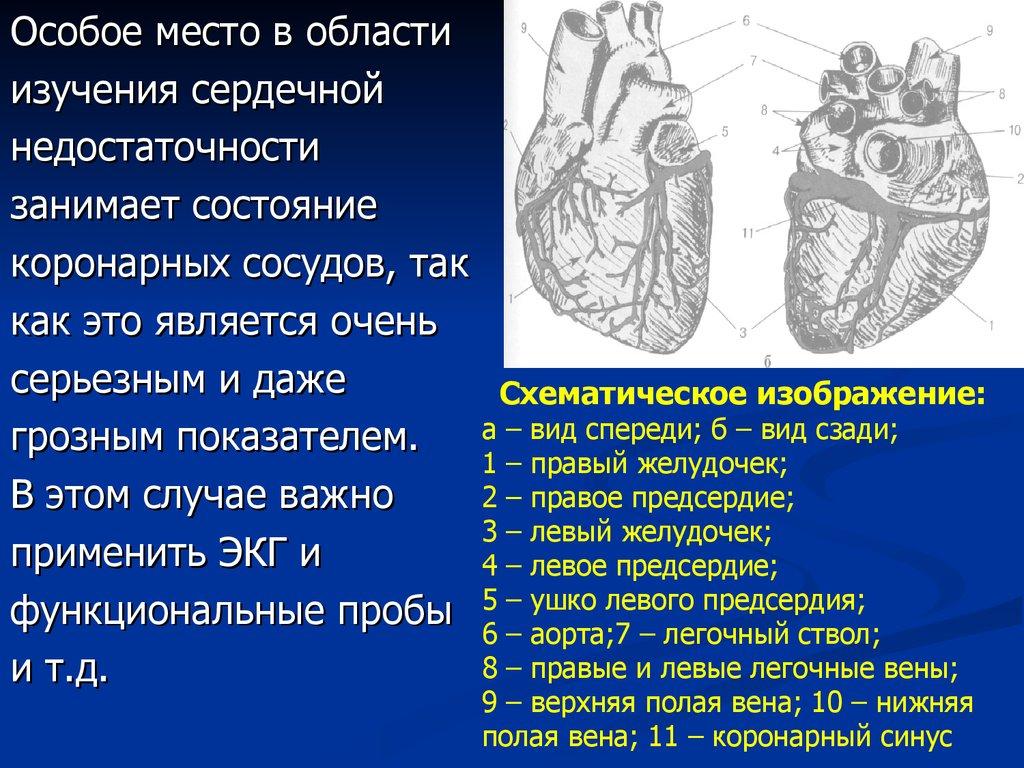 Недостаточность функциональная многих органов
