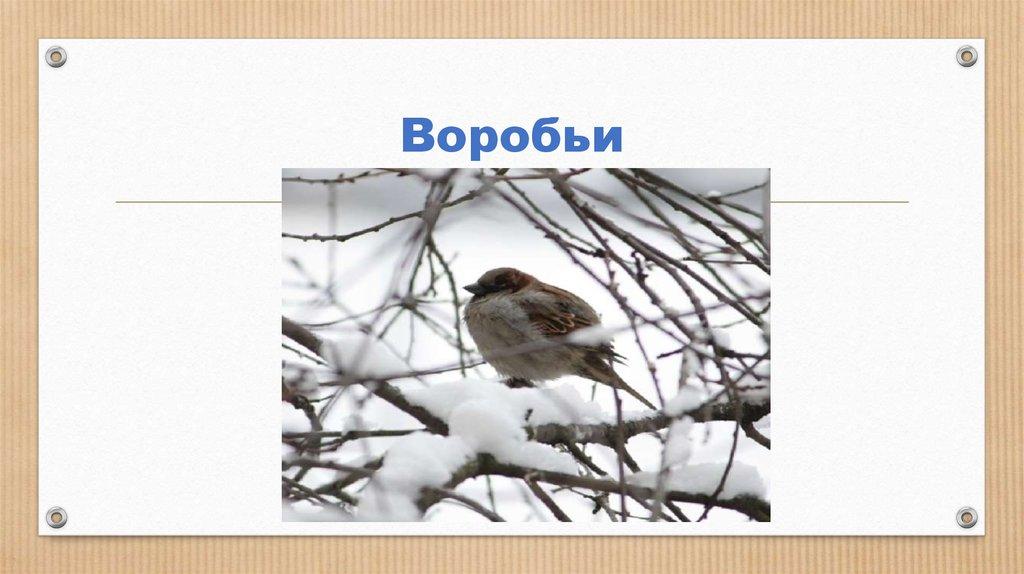 Сочинение Покормите Птиц Зимой