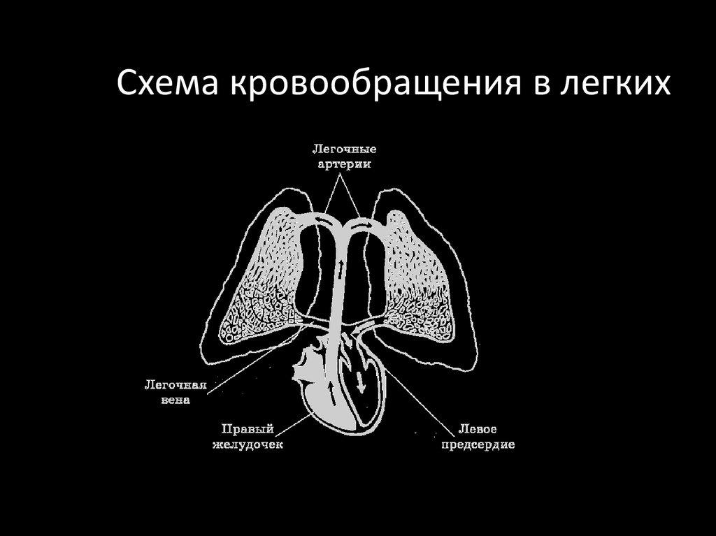 схема кровоснабжения гипоталамуса