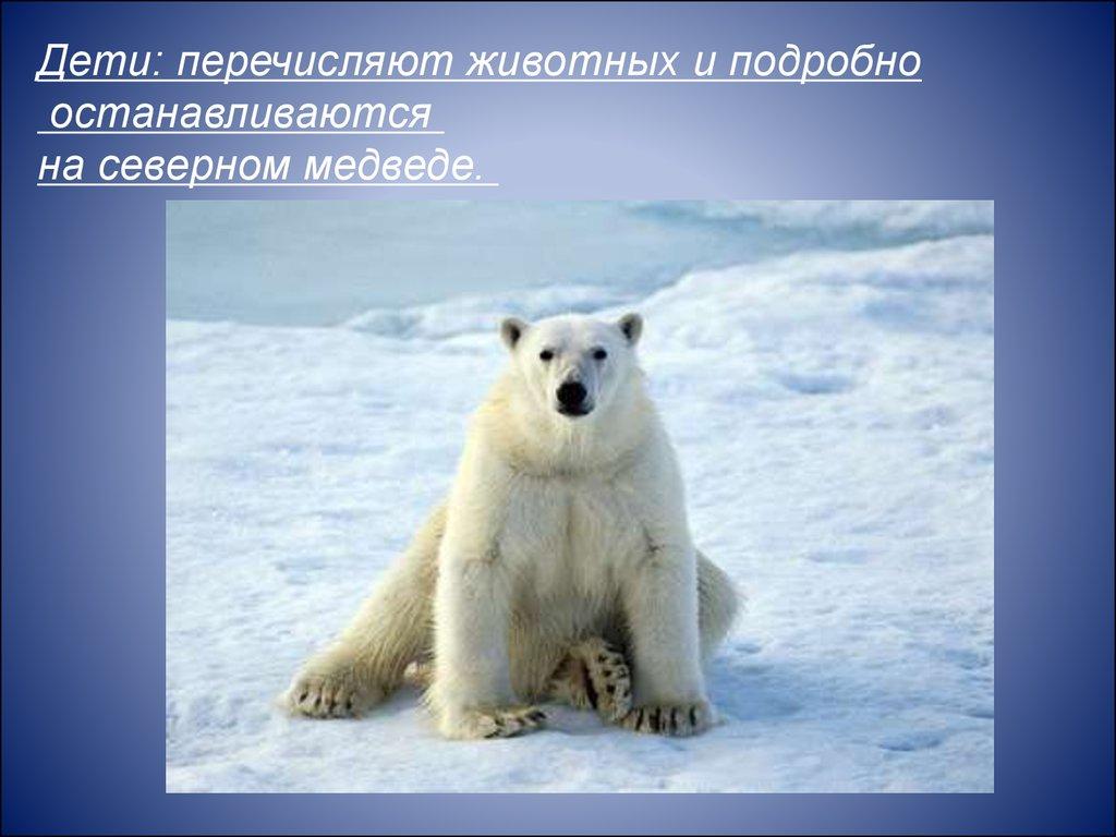Животные севера и жарких стран - презентация онлайн