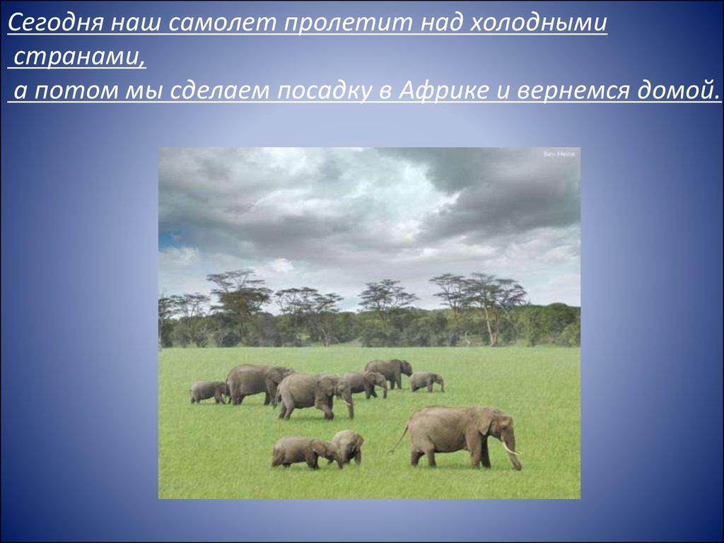 знакомство детей с животными севера