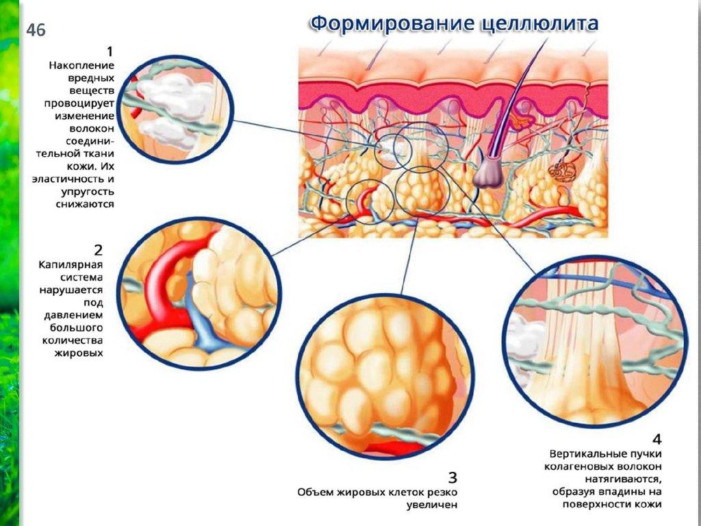 лечение волос мумием отзывы