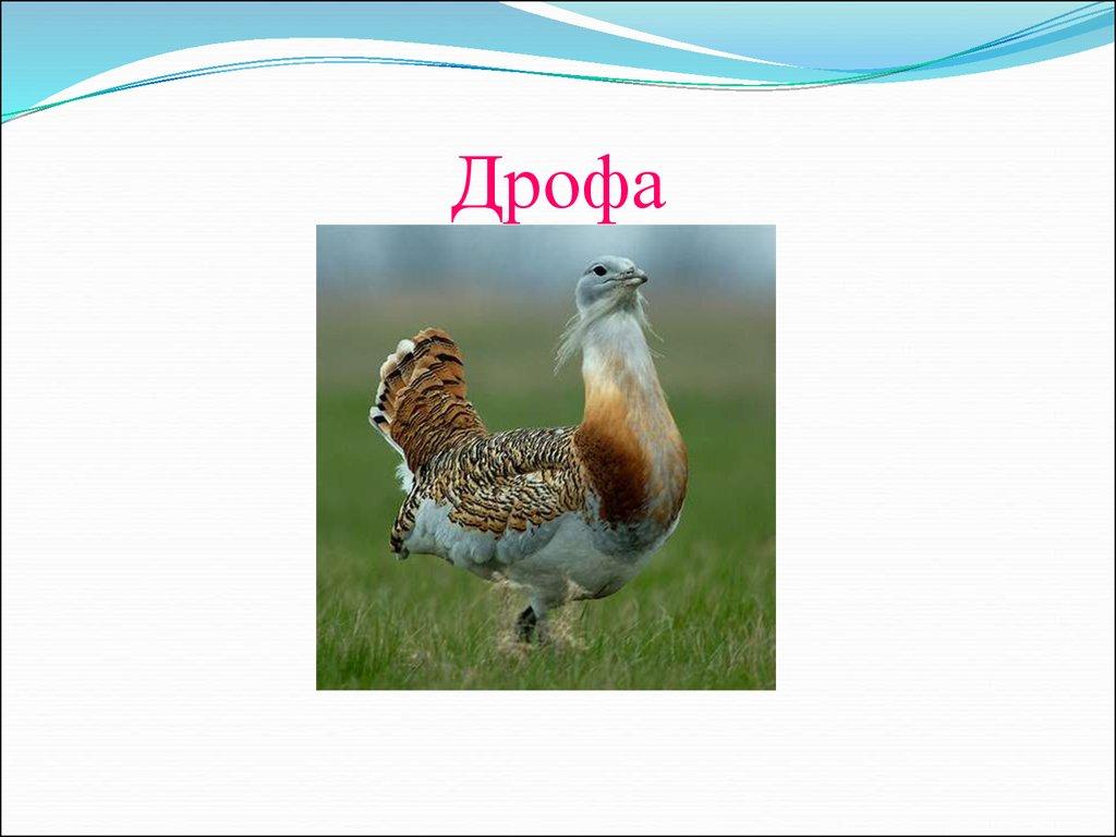 Департамент культуры и искусства гСаров Нижегородской области