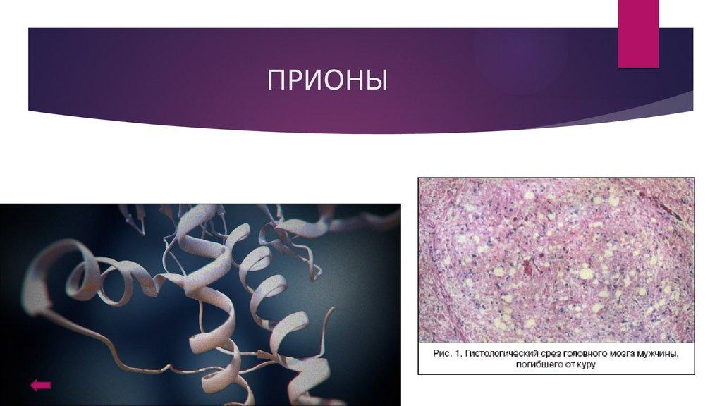 бактерии паразиты и бактерии полезные для человека